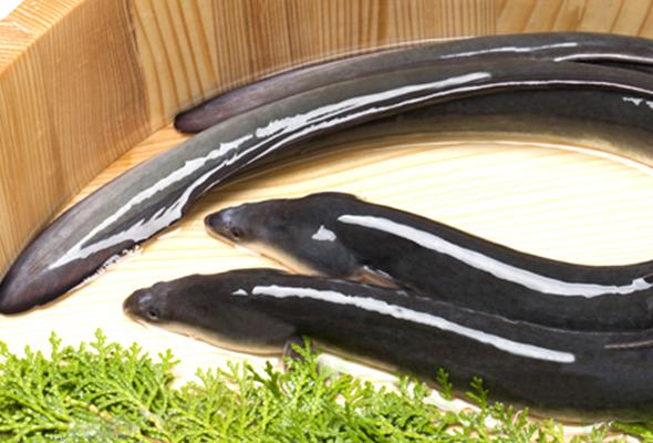 鰻のこだわり